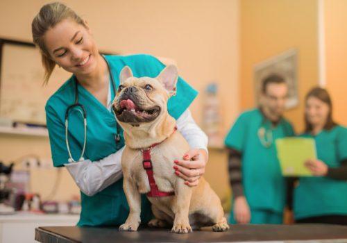 Florence aborda atuação do médico veterinário no mercado de trabalho em palestra gratuita