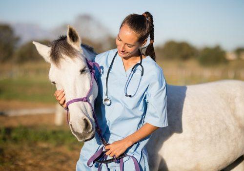 Florence parabeniza médicos veterinários pelo seu dia