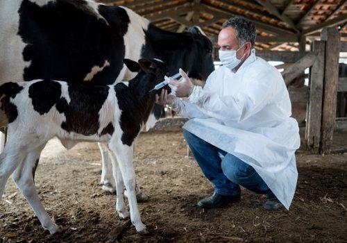 Entenda o papel da Medicina Veterinária no agronegócio