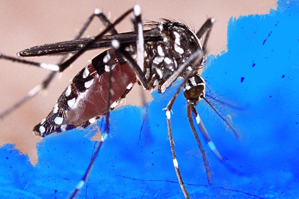 Florence alerta para medidas de prevenção à dengue